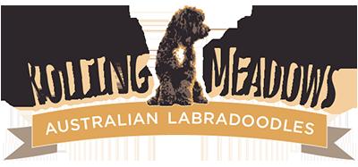Rolling Meadows Australian Labradoodles