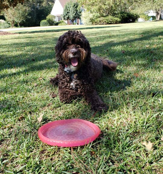 Bella 2019 playing Frisbee