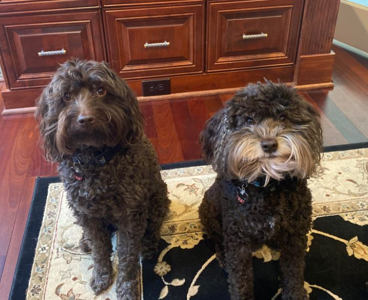 Hunter & Henry  Now 8 yrs old   Looking sharp, living a wonderful life in Wake Forest NC